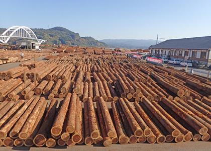 株式会社伊万里木材市場 外観の俯瞰画像